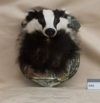 Badger by Dennis Baker