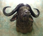 Cape Buffalo Head by Dave Hollingworth 2009