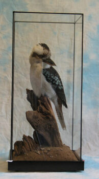 Kookaburra by Jack Fishwick 2003