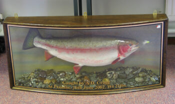 Rainbow Trout by Phil Leggett 2003