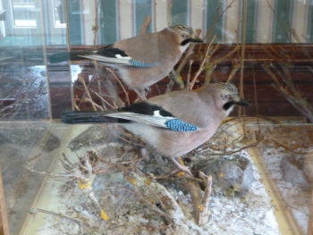 Jays by Barry Wilson