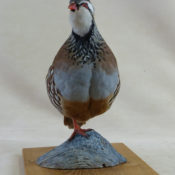 Partridge by Barry Wilson 2012