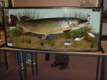 Pike with Roach by Barry Williams