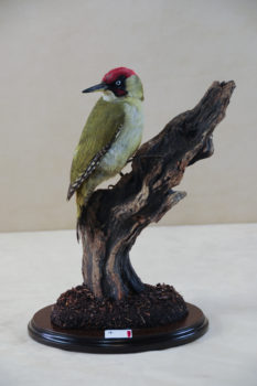 Green Woodpecker by Rob Marshall