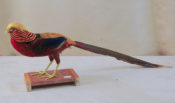Golden Pheasant by Isobel Hiom 2013