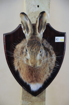 Hare by Kate Wilson