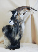 Wild Goat by David Irwin 2013
