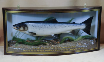 Salmon by Peter Scott 2013