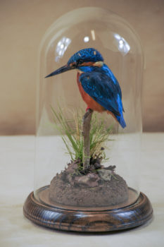 Kingfisher by William Hales