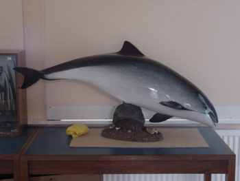 Porpoise by Peter Scott