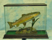 Brown Trout by Peter Scott 2004