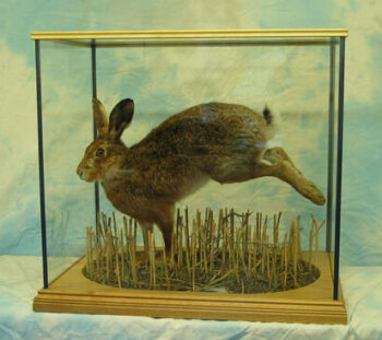 Hare by Dave Hornbrook 2004
