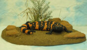 Gila Monster by Stephen Toher 2004