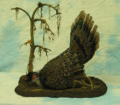 Peacock Pheasant by Colin Scott 2004