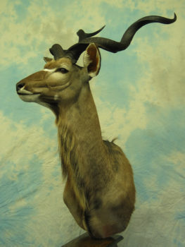 Kudu by Dave Hollingworth 2004