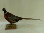 Pheasant by Michael Dunne
