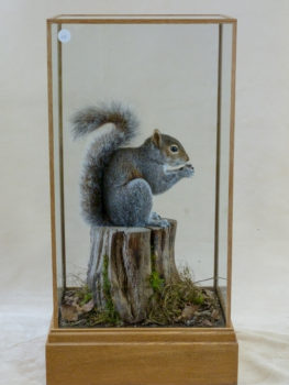Grey Squirrel by Mike Gadd