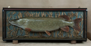 Pike by Colin Scott 2010