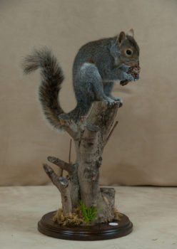 Squirrel by Mike Gadd