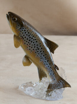 Brown Trout by Peter Scott 2010