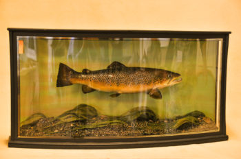 Brown Trout by Phil Leggett 2008