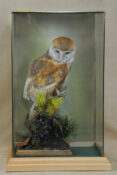 Barn Owl by Stewart Barber 2009