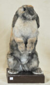 Rabbit by Dave Hornbrook 2009