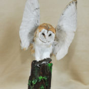 Barn Owl by Dennis Baker 2009