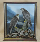 Gyrfalcons by Peter Scott 2009