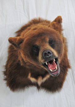 Brown Bear by Steve Newcombe