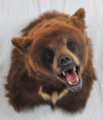Brown Bear by Steve Newcombe 2009