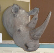 Reproduction Rhino Head 2011