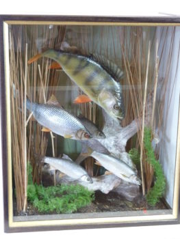 Perch and Dace by Peter Scott