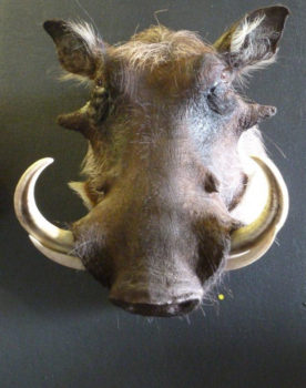 Warthog by Steve Brown