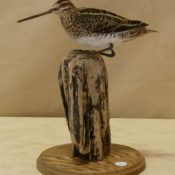 Common Snipe by Dave Hornbrook 2011