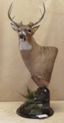 White-tailed Deer Head by Dave Hollingworth 2011