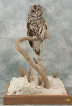 Ural Owl by Simon Askew