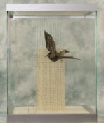 Starling by Clare Morgan