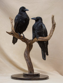 Crows by Sarah Keen