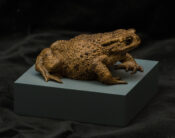 Toad by James Dickinson