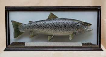 Lake Trout by Peter Scott