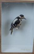 Great Spotted Woodpecker by Jazmine Miles-Long