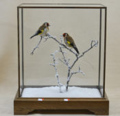 Goldfinches by David Irwin
