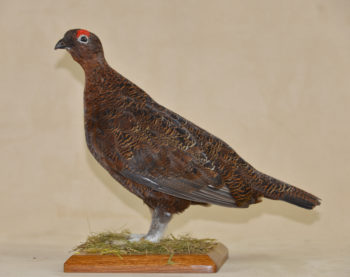 Grouse by Michael Dunne