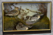 Pintails by Peter Scott