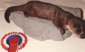 Otter by Peter Summers 1985