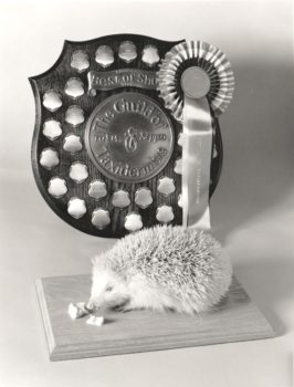 Hedgehog by James Dickinson