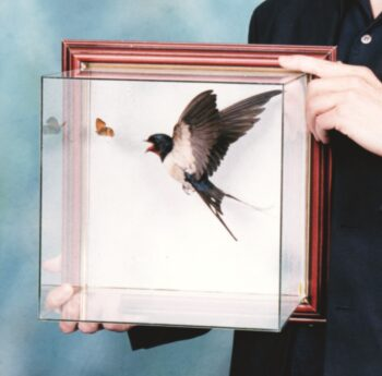 Swallow by CM 1999