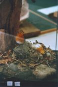 Robins by Jack Fishwick