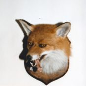 Fox Head by Dave Hollingworth 1994